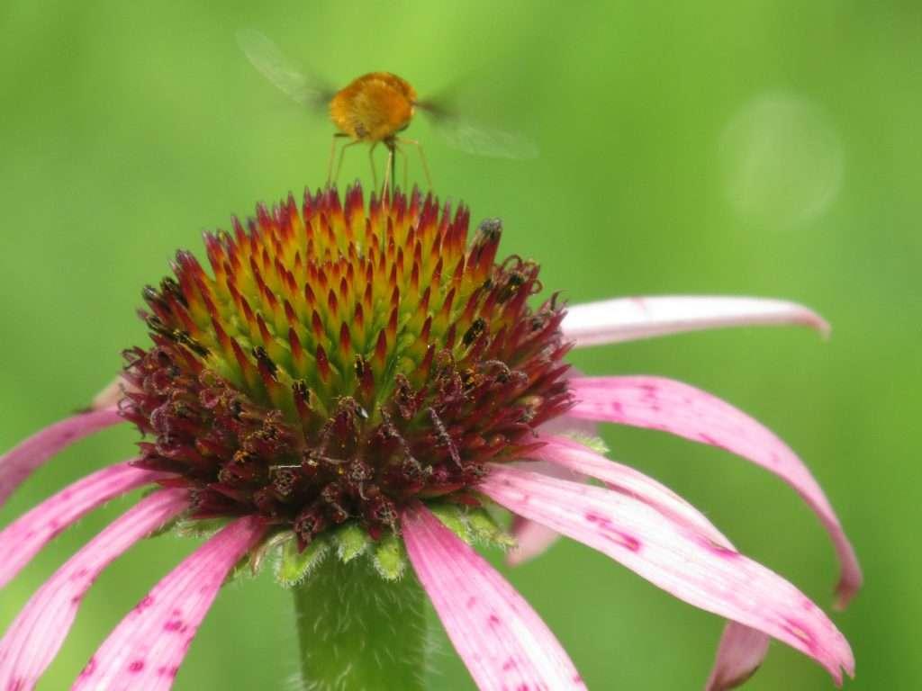 Un fiore e un'ape sono sufficienti a creare un mondo nuovo