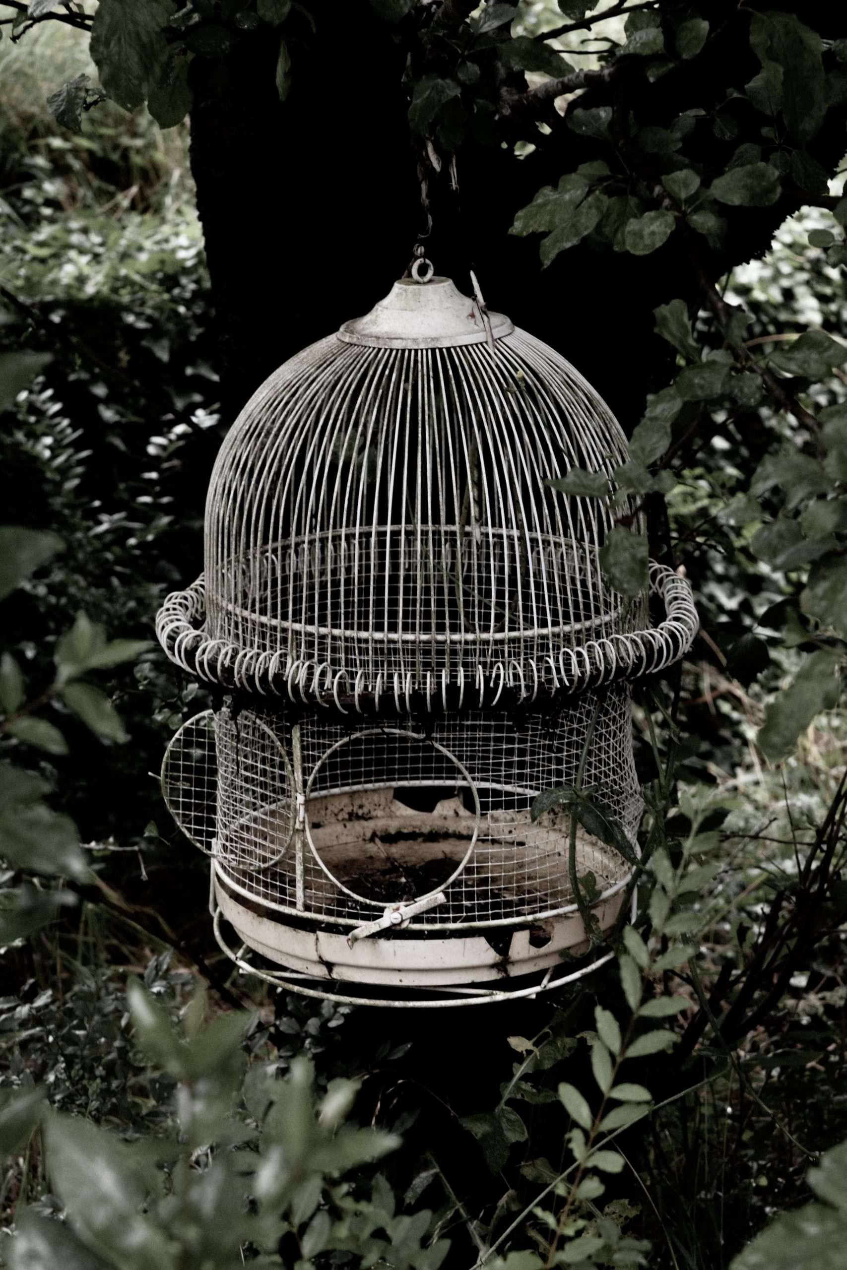 una gabbietta per uccelli vuota, con la porticina aperta